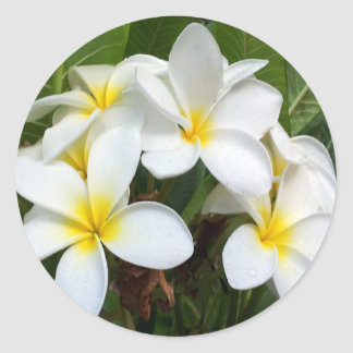 Hawaii Plumeria Flowers Classic Round Sticker