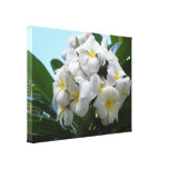 Hawaii Plumeria Stretched Canvas Print