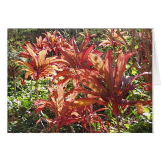 Hawaii Red Ti Leaf Plant Photo Thank You Note Card