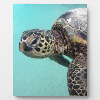 Hawaii Sea Turtle Photo Plaque