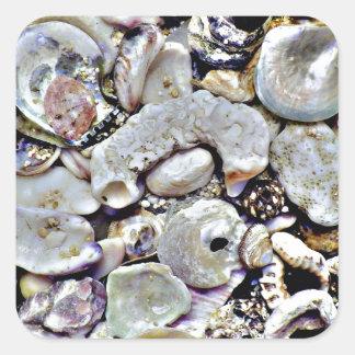 Hawaii Shells Close Up Square Sticker
