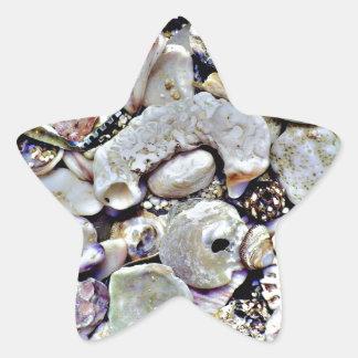 Hawaii Shells Close Up Star Sticker
