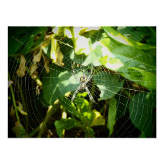 Hawaii spider web poster
