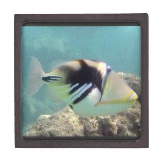 Hawaii State Fish - Humuhumunukunukuapua'a Jewelry Box