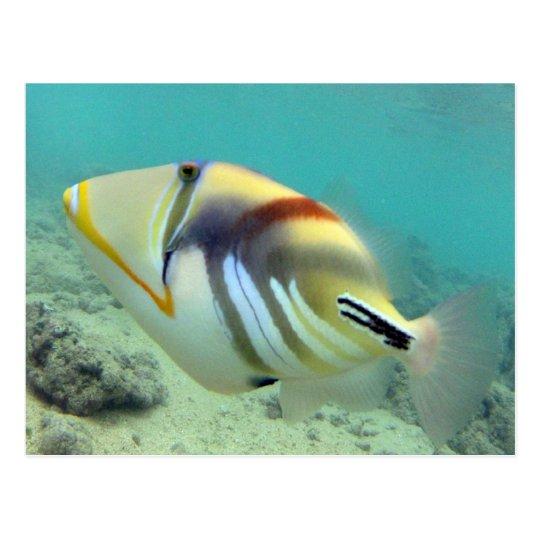 Hawaii State Fish - Humuhumunukunukuapua'a Postcard