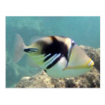 Hawaii State Fish - Humuhumunukunukuapua'a Post Cards