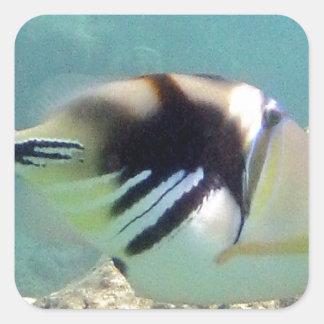 Hawaii State Fish - Humuhumunukunukuapua'a Square Sticker