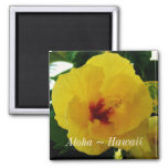Hawaii State Flower Yellow Hibiscus 2 Inch Square Magnet