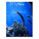 Hawaii subacuática postal