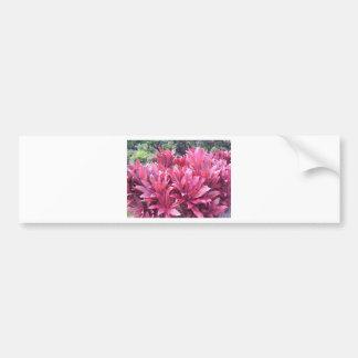 Hawaii Ti leave plant Bumper Sticker