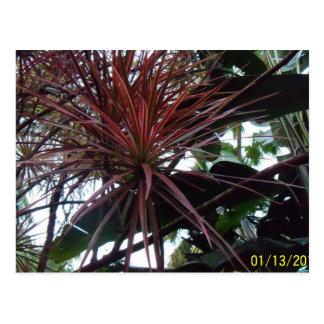 Hawaii Tropical Botanical Garden Postcard