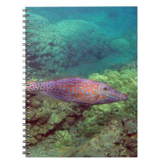 Hawaii Tropical Fish Spiral Notebook