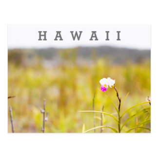 Hawaii Tropical Orchid Volcanoes National Park Postcard