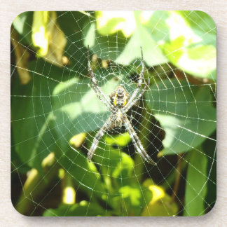 Hawaii tropical spider web coasters