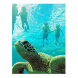 Hawaii Turtle and Snorkelers Postcard