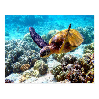 Hawaii turtle freedom peace and joy post card