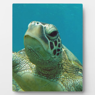 Hawaii Turtle Honu Plaque
