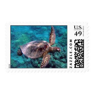 Hawaii Turtle Honu Stamp