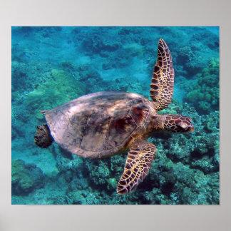 Hawaii Turtle Honu Poster