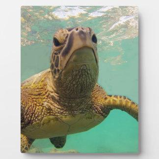 Hawaii Turtle Photo Plaques