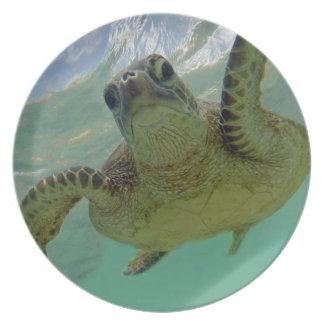 Hawaii Turtle Dinner Plates