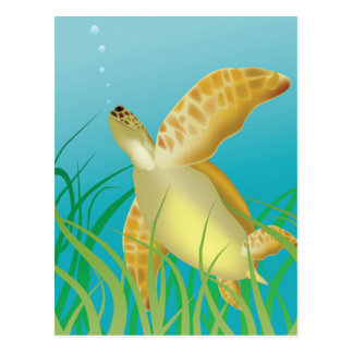 Hawaii Turtle Post Cards