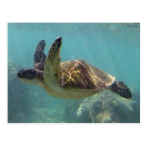 Hawaii Turtle Postcard