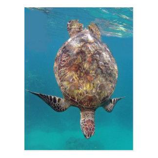 Hawaii Turtle Shell Postcard