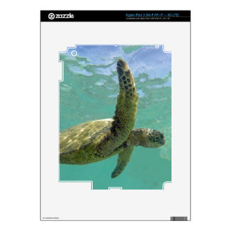 Hawaii Turtle iPad 3 Decals