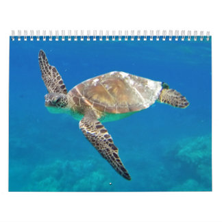 Hawaii Turtles Calendar