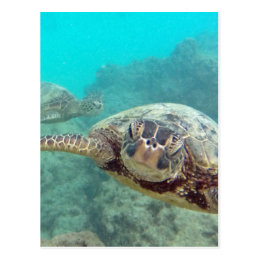 Hawaii Turtles - Honu Postcard