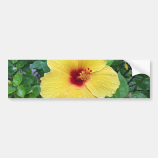 Hawaii Yellow Hibiscus Flower Bumper Sticker