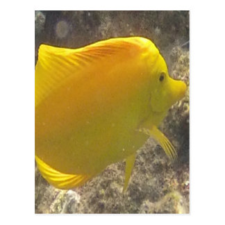 Hawaii Yellow Tang Fish Postcard