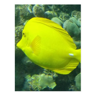 Hawaii Yellow Tang - Lau'i Pala Postcard