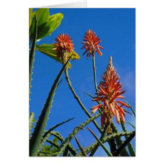 Hawaiian Aloe Blossoms Card