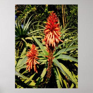 Hawaiian Aloe Poster