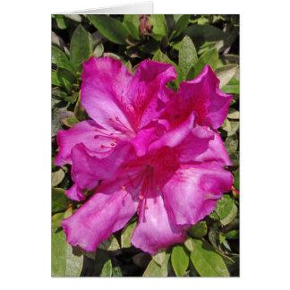 Hawaiian Azalea Blossoms Card