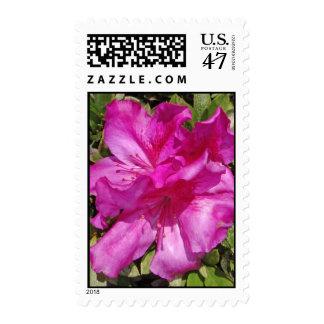 Hawaiian Azalea Blossoms Postage