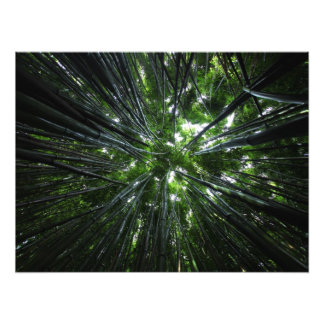 Hawaiian bamboo forest photo print