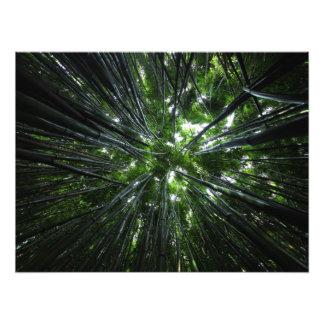Hawaiian bamboo forest photo art
