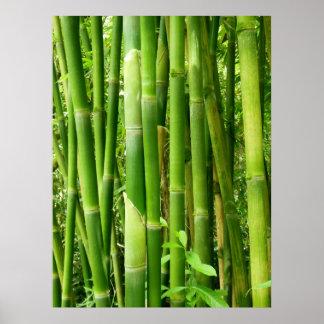 Hawaiian Bamboo Print