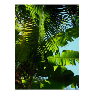 Hawaiian Banana and Coconut Trees Poster