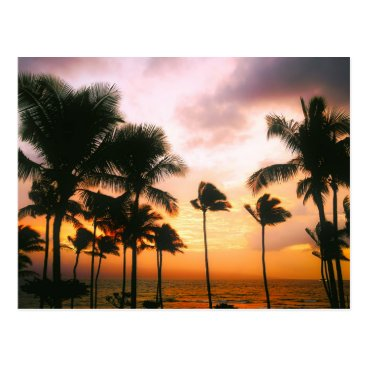 Beach Themed Hawaiian Beach Palm Trees Sunset - Hawaii Travel Postcard