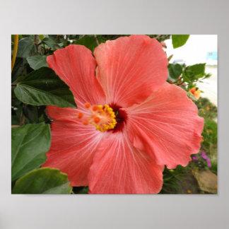 Hawaiian Beauty Poster