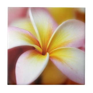 Hawaiian blanco de la flor de Hawaii del Frangipan Azulejo Cuadrado Pequeño