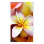 Hawaiian blanco de la flor de Hawaii del Frangipan Plantillas De Tarjeta De Negocio