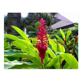 Hawaiian Bloom Postcard