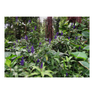 Hawaiian Blue Ginger Poster