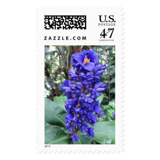 Hawaiian Blue Ginger Stamp