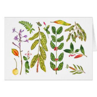 Hawaiian Botanical I Cards